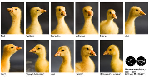 Moon Geese Portraits